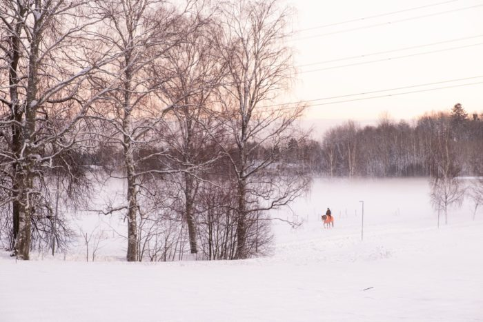A person on horseback crosses a snowy landscape of fields and trees.