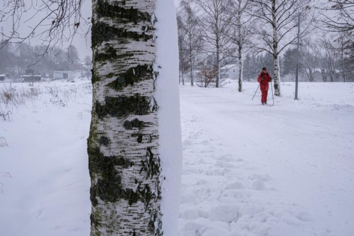 A person goes through a tree-lined park on cross-country skis.