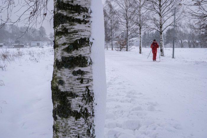 Человек на беговых лыжах идет по парковой зоне, окруженной деревьями.