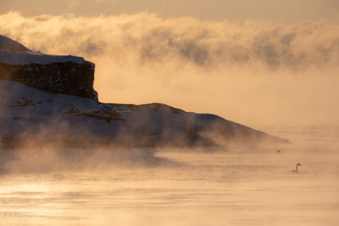 Береговая линия острова возвышается над силуэтом лебедя.