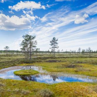 Acima de uma paisagem de árvores, grama e água, várias nuvens brancas se estendem dramaticamente por um céu azul.