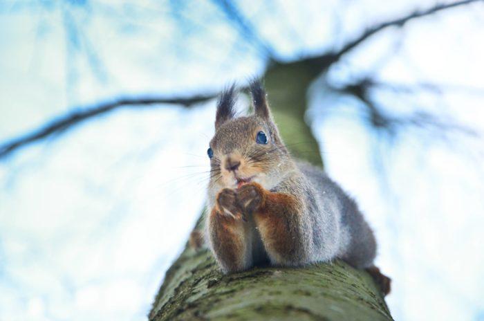 Um esquilo empoleira-se no tronco de uma árvore.