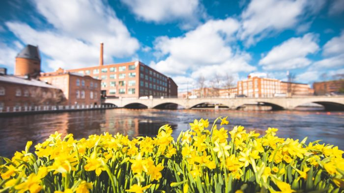 The foreground shows a row of daffodils in front of a river, with brick buildings on the far shore.