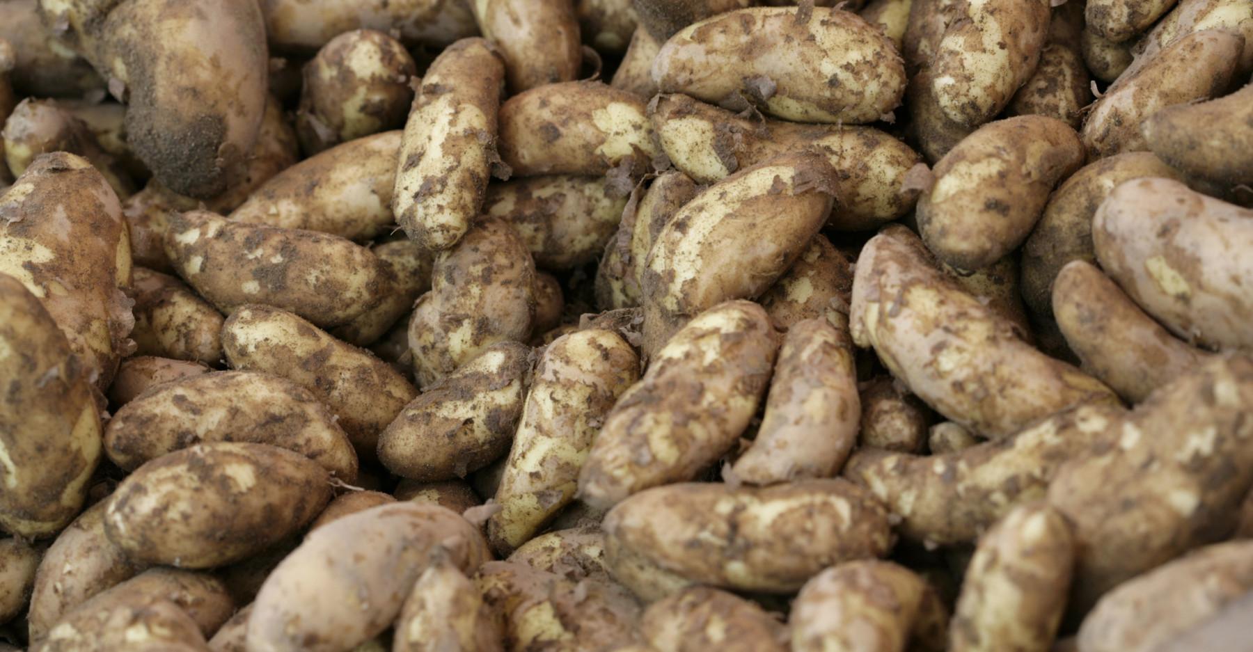 Ein Haufen roher Kartoffeln.